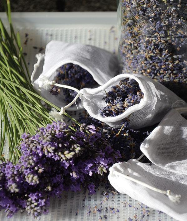 Lavendel drogen