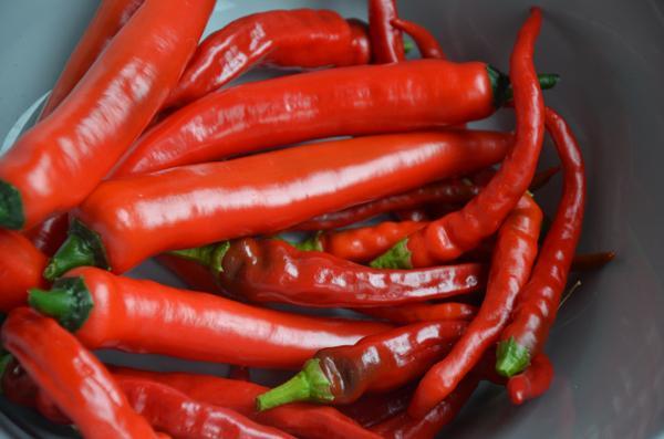 Rode pepers invriezen