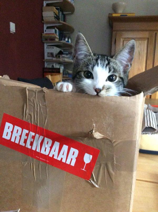 Zelfs de kat is blij met pakjes van WECKENonline